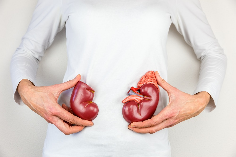 Power up Your Kidneys Function